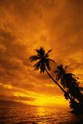 SunsetHNL